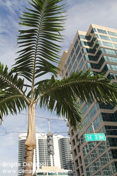 Downtown Fort Lauderdale ( SE 3 Av. & Las Olas Blvd.). Fort Lauderdale, FL