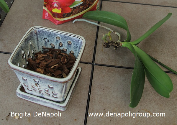 How to plant an orchid (3)