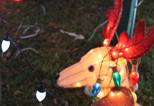 Holiday decorations- a deer