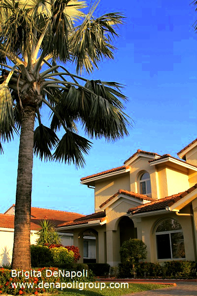 Palm in front of the house in Davie, FL